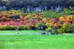 Horses gazing in fall colors of Niagara escarpment. Milton, ON, Canada stock photos