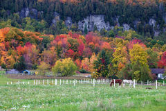 Horses gazing in fall colors of Niagara escarpment. Milton, ON, Canada Royalty Free Stock Images