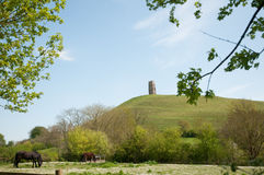 Horses and glastonbury tor Stock Images
