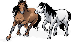 Horses Only Royalty Free Stock Photography