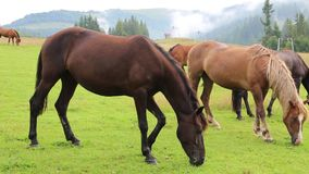 Horses on the grassland stock video footage