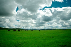 Horses on the grassland Royalty Free Stock Images