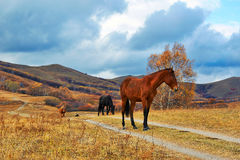 The horses on the grassland path Royalty Free Stock Photo