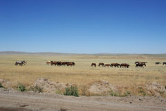Horses on the grasslands Stock Photography