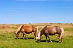 Horses graze Royalty Free Stock Image