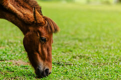 Horses graze farm Stock Photo