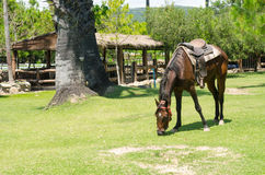 Horses graze on green grass in a hot sunlight day Royalty Free Stock Photo
