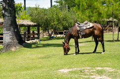 Horses graze on green grass in a hot sunlight day Royalty Free Stock Images
