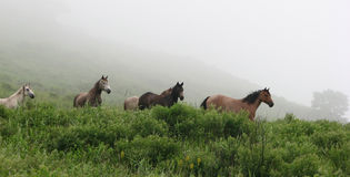 Horses graze in the meadow Royalty Free Stock Image