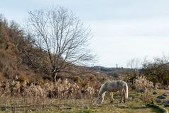 Horses graze in a meadow. In the Republic of Abkhazia Royalty Free Stock Image