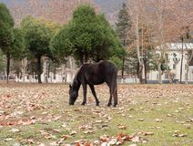 Horses graze in a meadow. In the Republic of Abkhazia Royalty Free Stock Images