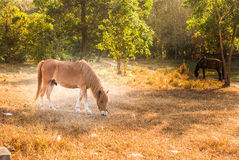 Horses graze on the meadow at sunset Stock Photo