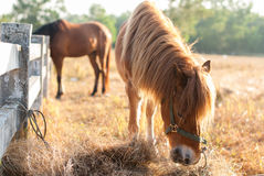 Horses graze on the meadow at sunset Stock Photos