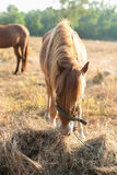 Horses graze on the meadow at sunset Royalty Free Stock Photo