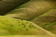 Horses graze in the mountains