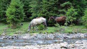 Horses graze near a mountain river stock footage