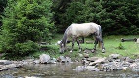 Horses graze near a mountain river stock video