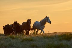 Free Horses Graze On Pasture At Sunset. Royalty Free Stock Image - 106226686