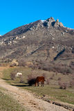 Horses are grazed at bottom of mountains near a c Stock Image