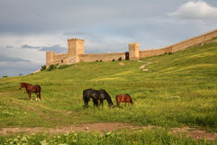 Horses. Are grazed on a meadow against the Genoese fortress in Sudak, Crimea Stock Image