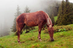 Horses are grazed on a meadow in a fog Stock Image