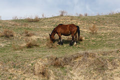 Horses grazed on a mountain slope Stock Photography
