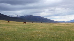 Horses are grazed on a pasture Stock Images