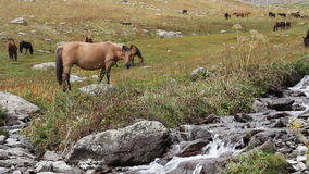 Horses are grazed on a pasture Royalty Free Stock Images