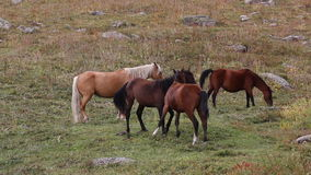Horses are grazed on a pasture Royalty Free Stock Image