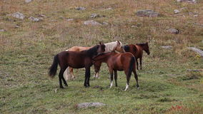 Horses are grazed on a pasture Stock Image