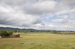 Horses grazing Stock Image