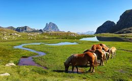 Horses grazing in Anayet plateau, Spanish Pyrenees, Aragon, Spain. Peak du Midi d Ossau is at background royalty free stock photos