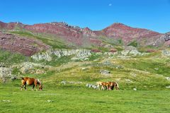Horses grazing in Anayet plateau, Spanish Pyrenees, Spain. Horses grazing in Anayet plateau, Spanish Pyrenees, Aragon, Spain royalty free stock photography