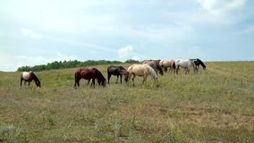 Horses grazing on the background of sky stock video footage