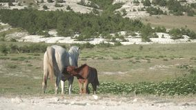 Horses on in the mountains stock video footage