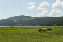 Horses Grazing. A beautiful and peaceful lake tucked away in the Bolu region of Turkey Royalty Free Stock Photos