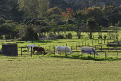 Horses grazing behind fence Royalty Free Stock Photos