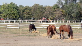 Horses grazing in corral stock footage