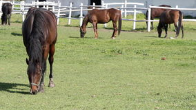 Horses grazing in corral stock video footage