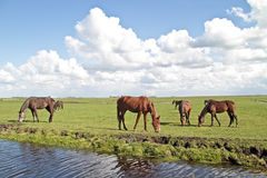 Horses grazing in the countryside Stock Photo