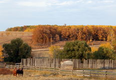 Horses Grazing in Fall Stock Image