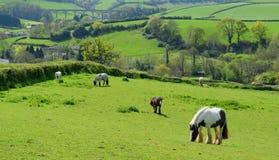 Horses grazing on a farmland Royalty Free Stock Photos