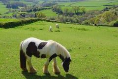 Horses grazing on a farmland Stock Photos