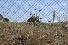 Horses grazing in fenced field royalty free stock photos