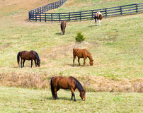 Horses grazing in field Stock Photo