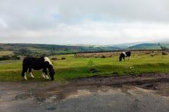 Horses grazing Stock Photography