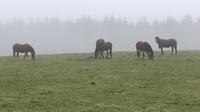 Horses grazing on the field. stock video footage