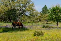 Horses grazing on the field stock photos