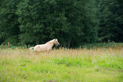 Horses grazing in a field near the forest Stock Photo