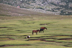 Horses are grazing on a field. stock image